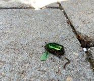 Maybug sur le trottoir Photos stock