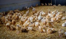 Mayenne feg Farm-5 royaltyfria bilder