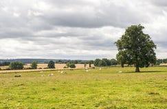 Mayenne - Landscape Royalty Free Stock Photography