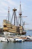Mayflower lizenzfreie stockfotos