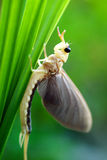 Mayfly between the grass