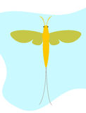 Mayfly Insect Clipart Vector Stock Photos