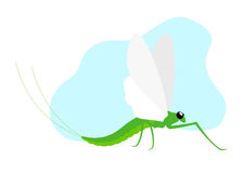 Mayfly Insect Royalty Free Stock Photo