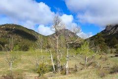 Mayo en los Colorado Rockies fotos de archivo libres de regalías