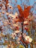 Mayo - flor fotografía de archivo