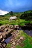 Mayo Landscape Stock Photos