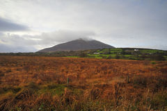 Mayo Landscape. Co.Mayo landscape showing wild grass and Mt.Nephin in background Royalty Free Stock Photos