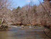 Mayo River p? Mayo River State Park royaltyfria foton