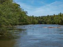 Mayo River p? Mayo River State Park fotografering för bildbyråer