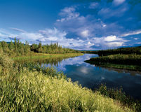 Mayo River in Yukon. Mayo River in the forest in Yukon scenery Stock Photos