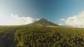 Mayon Volcano near Legazpi city in Philippines. Aerial view over the palm jungle and plantation at sunset. Mayon Volcano. Is an active volcano and 2462 meters stock video footage