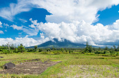 Mayon volcano in the philippines. Mayon is a classic stratovolcano (composite) type of volcano with a small central summit crater. The cone is considered the royalty free stock photo