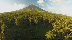 Mayon vulkan nära den Legazpi staden i Filippinerna Flyg- sikt över den gömma i handflatandjungeln och kolonin på solnedgången Ma stock video