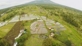 Mayon vulkan nära den Legazpi staden i Filippinerna Flyg- sikt över risfält Den Mayon vulkan är en aktiv vulkan och stock video