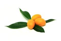Mayongchid, Mayongchit marian śliwka, gandaria, śliwkowy mango, biały tło Fotografia Stock