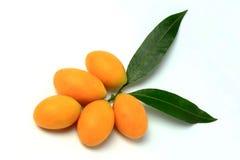 Mayongchid, Mayongchit marian śliwka, gandaria, śliwkowy mango, biały tło Obraz Royalty Free