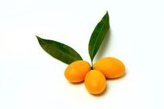 Mayongchid, Mayongchit marian śliwka, gandaria, śliwkowy mango, biały tło Zdjęcia Royalty Free