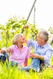 Mayores felices que comen vino de consumición de la comida campestre Imagenes de archivo