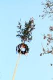 Maypole Стоковое Изображение RF