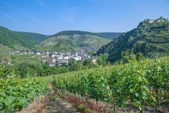 Mayschoss,Ahr Valley,Germany royalty free stock images