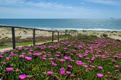 Mazagon wyrzucać na brzeg, przystępuje plaża z różowymi kwiatami, Huelva, Hiszpania Zdjęcia Royalty Free