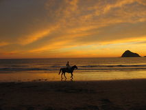 mazatlan ridning s för hästrygg Royaltyfri Foto