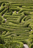 The Maze. The hedge maze at Glendurgan Gardnes in Cornwall Stock Photo