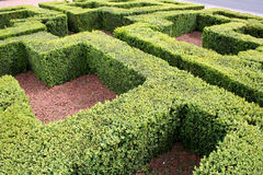 Maze. A picture of a mini grass hedge maze Stock Photography