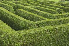 Maze. Large box hedge garden maze Stock Photos