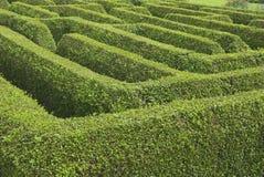 Maze Arkivfoton