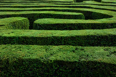 Maze. A maze in a country estate in uk. Useful concept for next steps, moral maze. This is a hedge maze at Longleat, Wiltshire UK. Connecting paths Stock Photography
