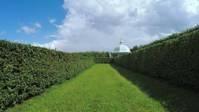 Maze among the bushes stock footage