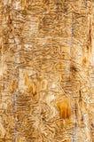 Maze Carved dagli scarabei alesati di legno fotografie stock