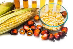 Maze corn and oil palm derived biofuel in test tubes. Royalty Free Stock Image