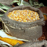 Maze corn in sack. Ready for pop corn Stock Photography