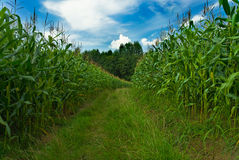 Maze field Stock Images