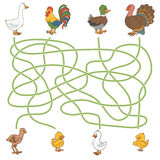 Maze game: help the young find their parents (farm birds: duck, Stock Photography