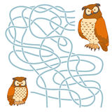 Maze game (owl family) Stock Images