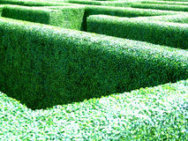 Maze in a garden Royalty Free Stock Photo