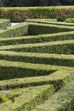 Maze in the garden Royalty Free Stock Photography