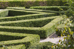 Maze in the garden Stock Images