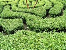Maze garden Stock Images