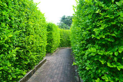 Maze garden in the park Royalty Free Stock Images