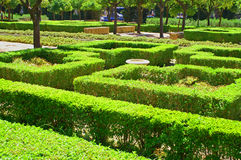 A maze of green bushes. This maze was constructed using careful gardening of bushes. Benches can be seen in the distance Stock Images