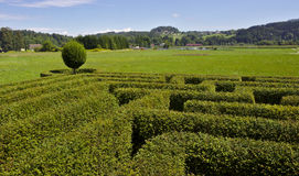 Maze in a hedge. Hedge maze in Green plains Royalty Free Stock Photography