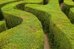 Maze hedges. Tracks of a swirling maze leading to nowhere Royalty Free Stock Photo