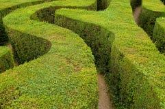 Maze hedges Royalty Free Stock Photo