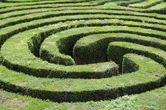 Maze made from a hedge. The middle of a complex hedge maze Stock Photos