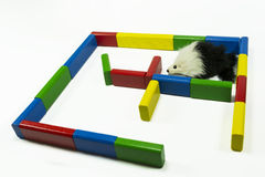 Maze and mouse stock image
