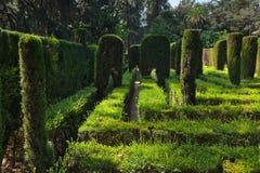 Maze på den verkliga alcazaren arbeta i trädgården i Seville Spanien Royaltyfria Foton